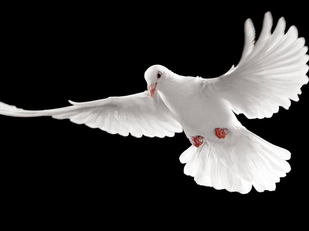 A-Minha-Paz-vos-dou-1